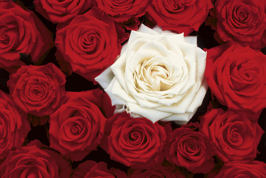 01503_Bed_of_Roses