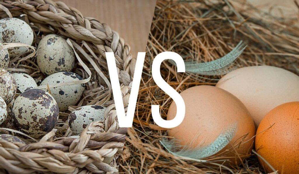 Чем полезны яйца | Здоровый образ жизни
